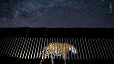 © Alejandro Prieto - Wildlife Photographer of the Year