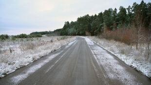 Sól sypana na drogi sprawia, że drzewa umierają