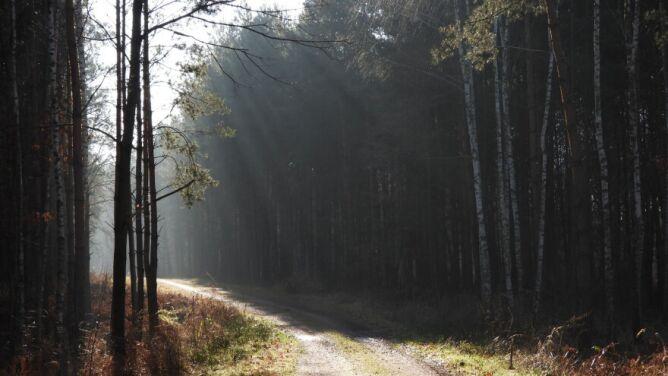 Pogoda na dziś: słoneczna aura, do 19 stopni Celsjusza